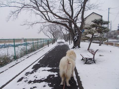 2-8-1雪だ!