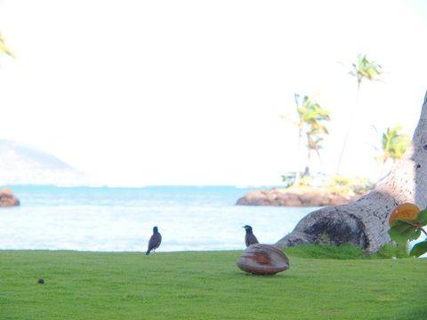 travel_hawaii_kahala_beach_06