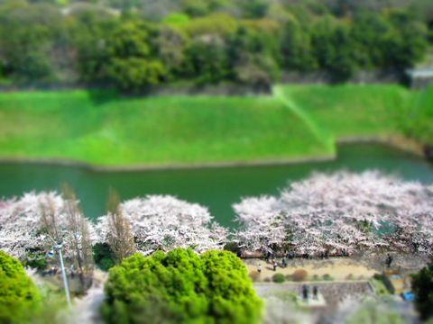 sakura2011_05