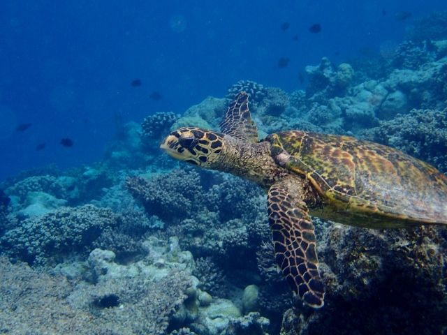 travel_maldives_resort_01