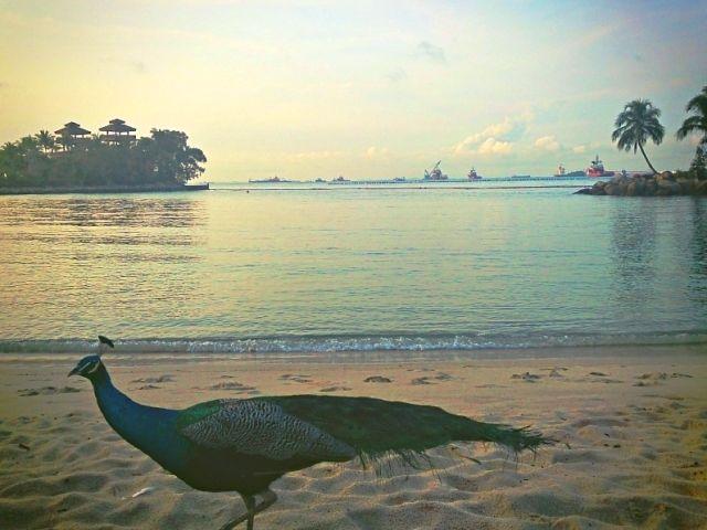 sentosa_run_beach_01