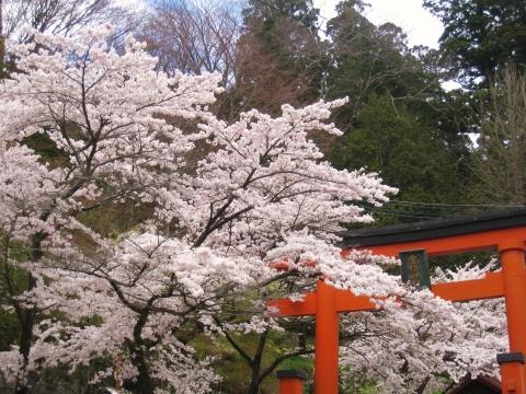travel_yamanashi_08