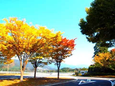 analog_momiji_kairo_01