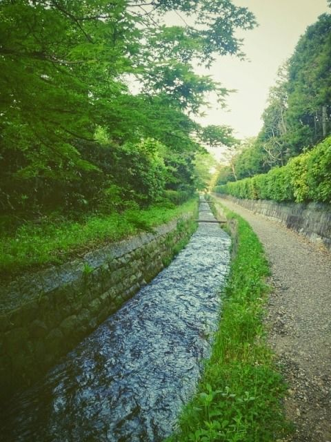 run_kyoto_201504_05
