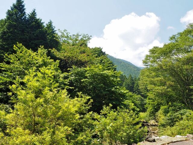 kabukuwa_20200816_02