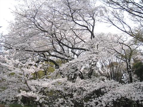 analog_kinuta_02.jpg