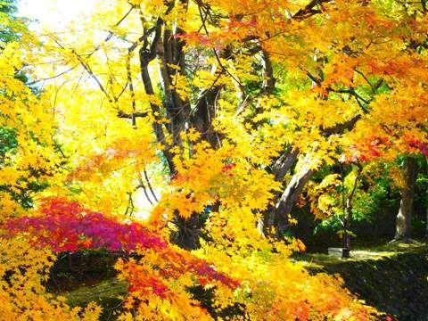 analog_momiji_kairo_02
