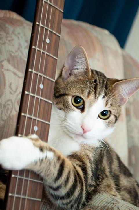 guitar-neko21