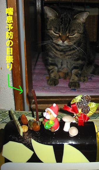 2005X'masケーキと猫