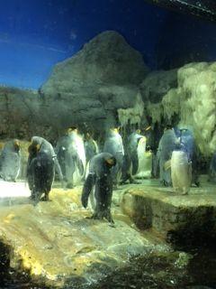 複数ペンギン