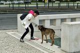駅伝のために、頑張れ!!犬