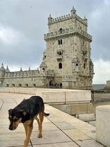ベレンの塔と犬