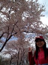 満開の桜&もこ