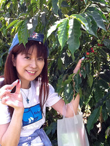 珈琲豆摘み2