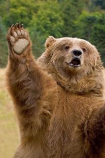 男性襲ったクマを駆除しない方針 厚岸町