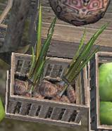 芽の伸びたイモ?