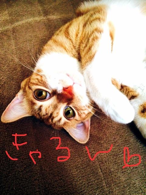 猫派なリエちゃん