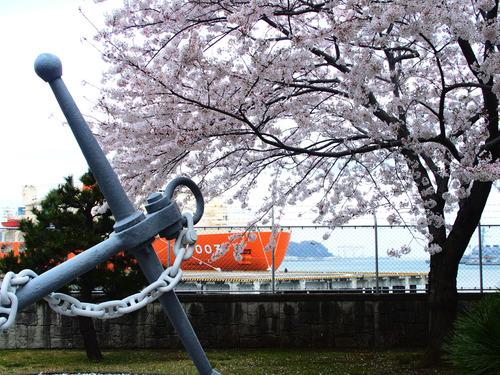 20150401桜横須賀OLs-4010002