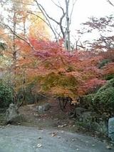 紅葉(古賀)