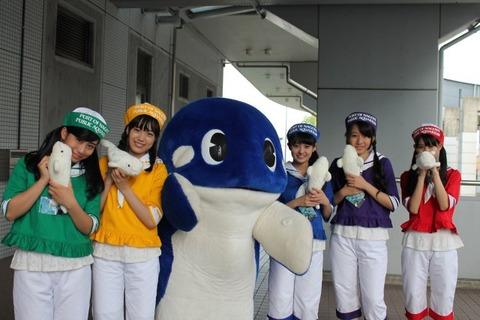 news_xlarge_syachi_dolphin_01