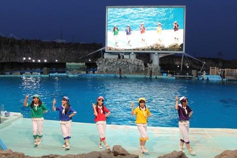 news_header_syachi_dolphin_03