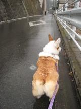 ガッツ散歩