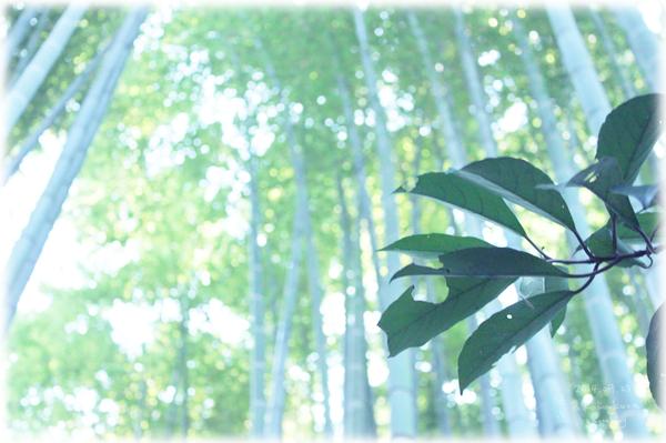 鎌倉おでかけ4*報国寺の竹たち