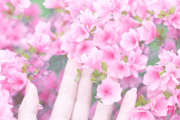 春色つつじ ❁お返事も