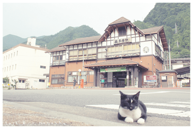 奥多摩の猫たち*お写真たくさん