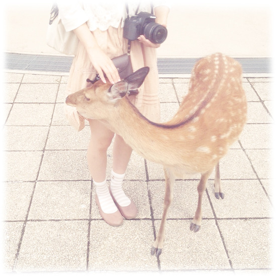 広島2日目 宮島の鹿たち。