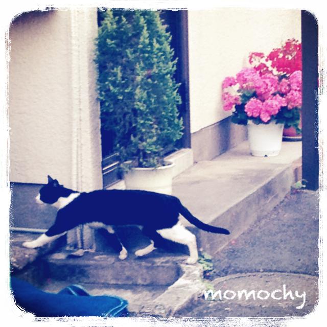 猫と写真とぷれぜんと@おへんじも