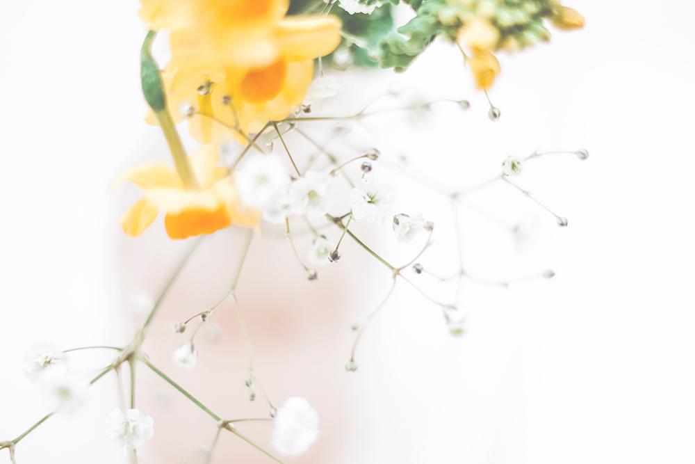 新春のお花たち。