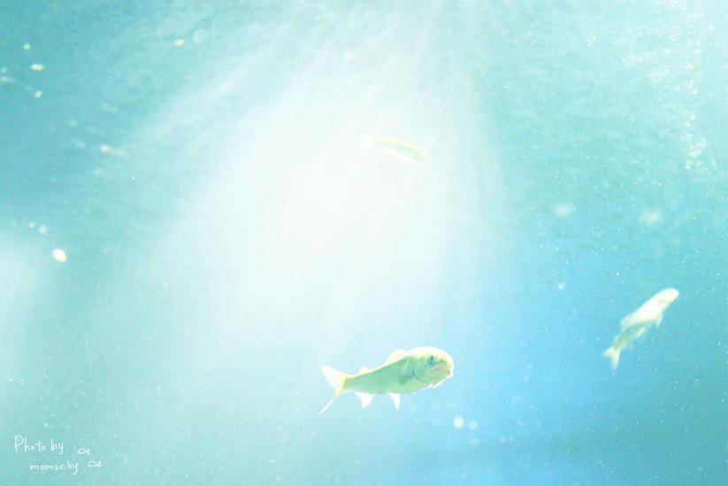 サンシャイン水族館*お写真たくさん