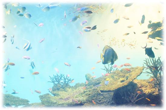 広島2日目 宮島水族館!*お写真たくさん