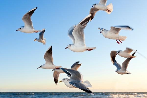 gulls-370012_960_720