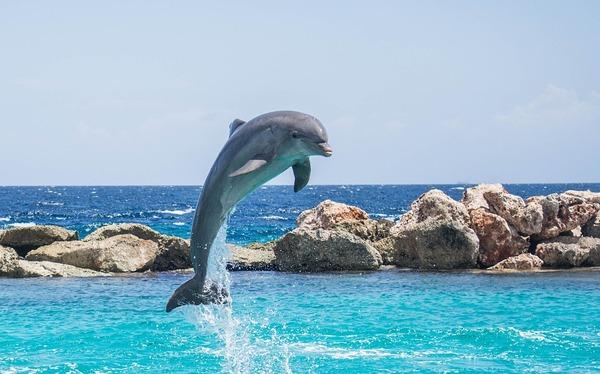 dolphin-906176_960_720