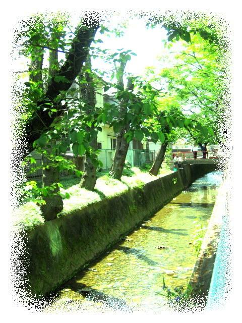 .P*J* 's  Home & Garden