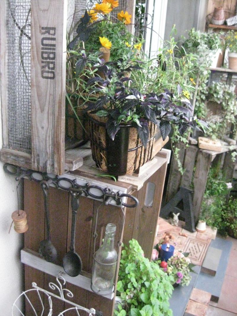 .P*J* 's Garden