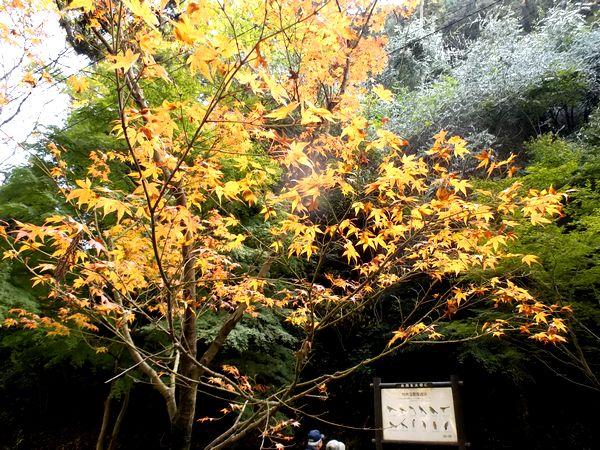 錦帯橋紅葉谷公園