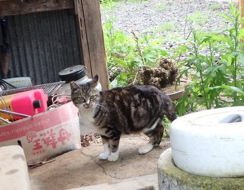 タロウ宅猫