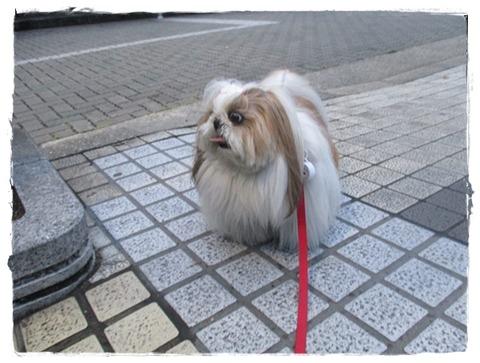 IMG_3048ユニ