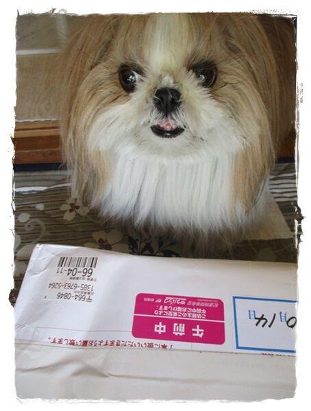 IMG_8269ユニ
