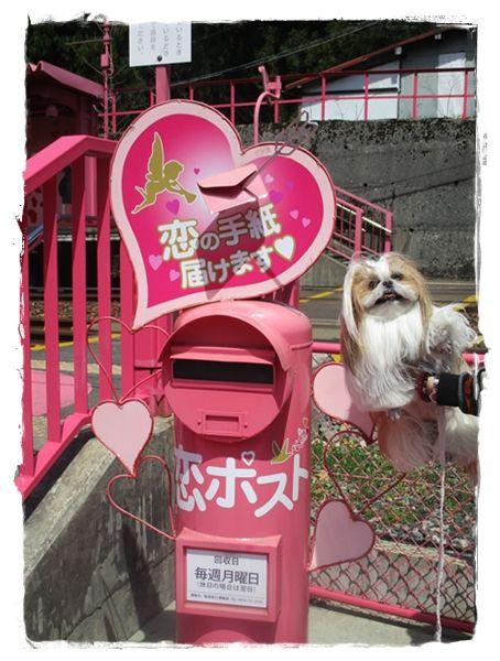 IMG_2566ユニ