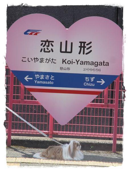 IMG_2568ユニ