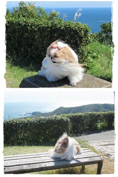 cats風が1