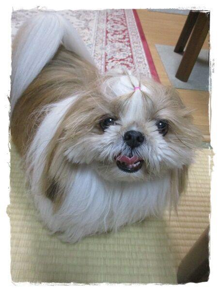 IMG_5555ユニ