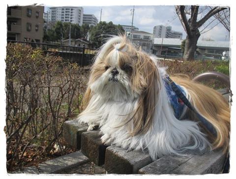 IMG_2326ユニ