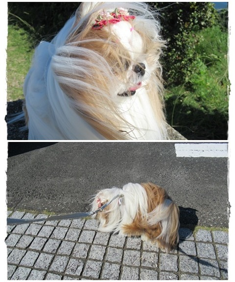 cats風が