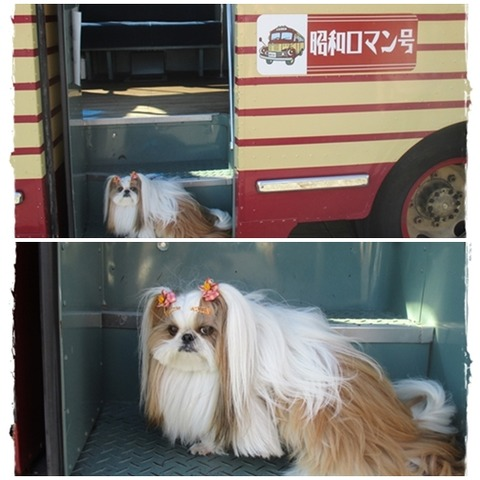 catsバス&ユニ