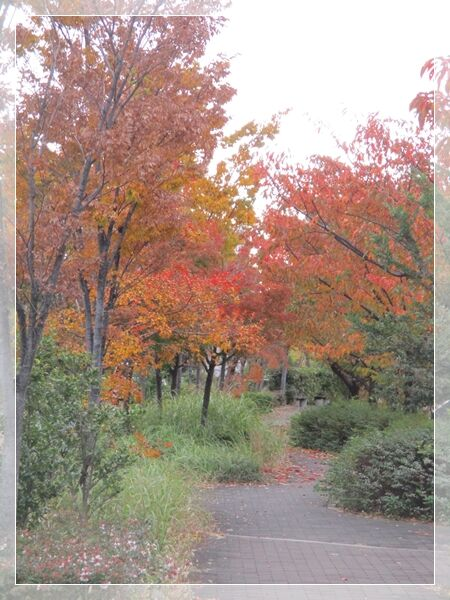 紅葉を楽しみながら散歩♪